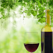 Glass and Bottle of red wine in vineyard on green vineyard background