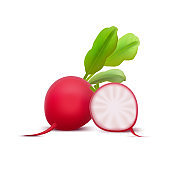 Realistic 3d Detailed Whole Radishes and Half. Vector