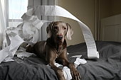 Dog tired after playing with toilet paper