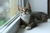 Lazy lovely black cat lying by the window. Gray tabby cute kitten with beautiful eyes relaxing on window sill.