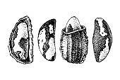 Set of hand drawn brazil nuts