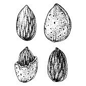 Hand drawn almonds