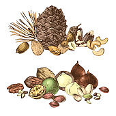 Borders with hand drawn edible nuts
