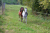 White Horse and Brown Horse Running on Meadow