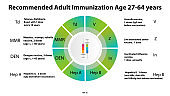 Vector infographic recommended adult vaccines 27-64 years