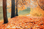 Autumn landscape - yellowed trees and fallen autumn leaves in city park alley in cloudy weather
