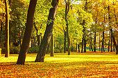 Autumn park in cloudy weather - picturesque autumn landscape