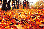 Autumn October landscape - park trees and fallen autumn leaves in city park in autumn day. Focus at the foreground