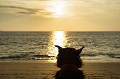 One Dog enjoying beautiful sunset on the beach alone