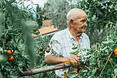 Portrait of active senior man gardening