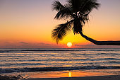 Coconut palm tree at sunset on exotic beach