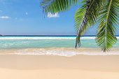 Sandy beach with palm tree and tropical sea