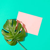 Tropical monstera leaf with pink paper card note on vivid blue background.
