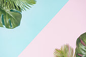 Tropical background with pastel pink and blue copy space.