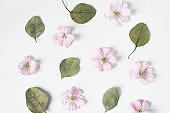 Feminine floral pattern. Dry eucalyptus leaves and pink Japanese cherry tree blossoms on old white wooden table background. Flat lay, top view.