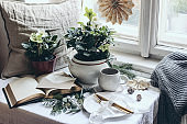 Moody winter breakfast still life scene. Christmas festive table setting with golden cutlery, cup of coffee, greeting card, eucalyptus and fir tree branches. Potted hellebores flowers at the window.