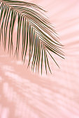 Summer beach day scene with tropical plams shadow on pink background.