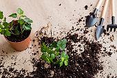 seedling germination home plant gardening