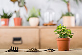 spring plant repotting indoor garden tool replant