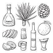 Tequila ingredients hand drawn monochrome illustrations set