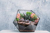 diy florarium modern organic interior decor plants