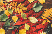 autumn foliage colorful fall leaves background