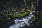 Cascading water stream in the forest