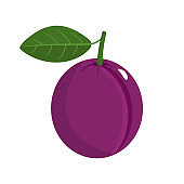Plum with stem and leaf isolated on white background. Organic fruit. Cartoon style. Vector illustration for any design.
