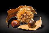 Still life on black background some chestnuts and a chestnut hedgehog.