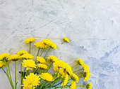 yellow chrysanthemum flower on concrete background frame