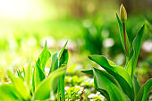 Spring background. Green flowers in bright sunlight. Beautiful sunny bokeh in springtime on flower bed.