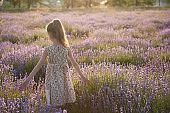 pretty little caucasian girl in dress walking through summer violet flower lavender field