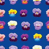 Pansies. Floral seamless pattern