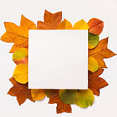 Photoframe with blank space surrounded by yellow fallen leaves
