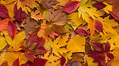 Bright colorful autumn fallen leaves background for advertisement