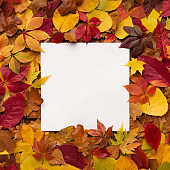 Bright and colorful autumn frame of fallen leaves