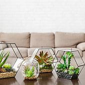 Indoor plants in florarium vases on table