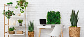 Office place with various plants on the bookshelf