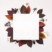 Autumn leaves square frame with copy space