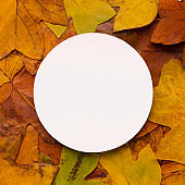 Blank space for advertisement on autumn fallen leaves background
