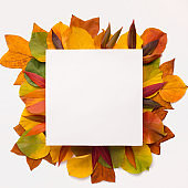 Square frame with blank space for text with fallen autumn leaves