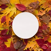 Round white blank space for logo among colorful autumn leaves