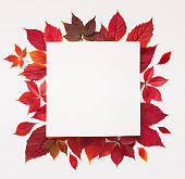 Red autumn fallen leaves with square blank space inside