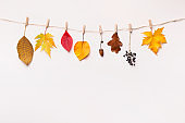 Creative autumn background with drying on rope leaves