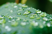Droplets of Water on  a Leaf