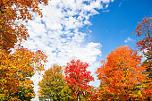 Colorful autumn foliage tree top leaves against blue sky and white clouds