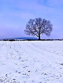 Bare tree silhouette on snow covered field. Vibrant colorful winter landscape.