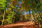 Amazing and sunny autumn in the forest in Poland