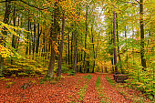 Wonderful and brown path in sunny forest, Poland