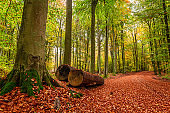Beautiful gold path in green forest, Poland